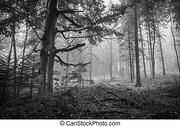 Spooky forest - Monochrome horizontal shot of a scary,...