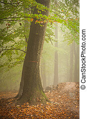 Tree in a foggy forest