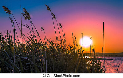 Sunset on the lake - Sunset through the reeds on the lake
