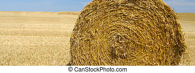 panoramic view of hay bale - France Europe