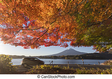 Maple leaves change to autumn color at Mt.Fuji, Japan - This...