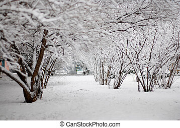 white snow covered the shrubbery
