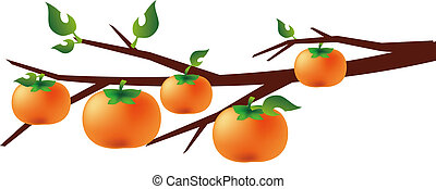 persimmon - illustration drawing of beautiful orange...