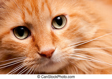 Adorable Orange Kitty cat posing for the Camera - Adorable...