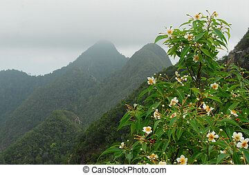 Langkawi - Flowering plants in the mountains of Langkawi,...