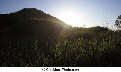 Hill with grass - Lush thickets backlit on small hill