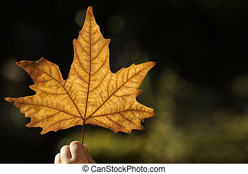 beautiful autumn leaf - child hand with beautiful yellow...