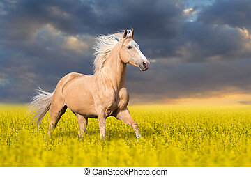 Palomino horse in flowers - Palomino horse with long blond...