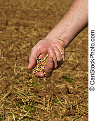 Farmer sprinkling Grain from his Hand