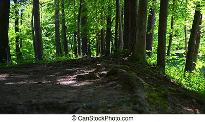 Footpath in a dark forest - Footpath in a dark forest at day...