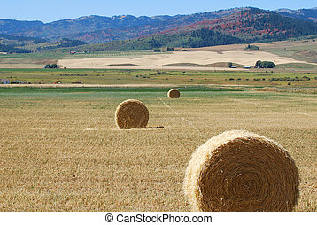 Mountain Harvest - Round hay bales sitting in a field in...