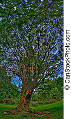 The Grand Oak - A giant oak tree in Brigit\'s Gardens park...