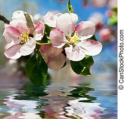 Apple blossom Flowers over water