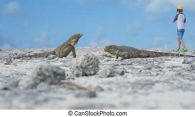 Little boy photographing iguana, Cayo largo, Cuba