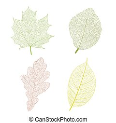 Leaf skeleton set on white background