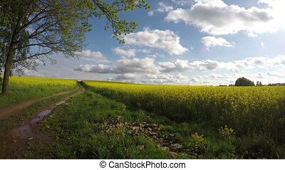 summer rapeseed field road and beautiful clouds. Panoramic...