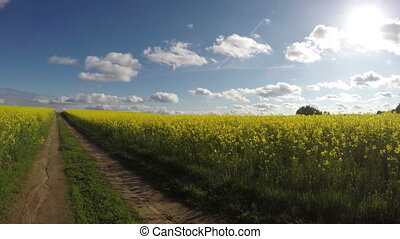 rural road and rapeseed fields - rural road and rapeseed...