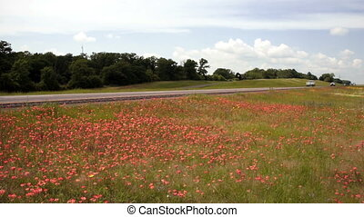 Wildflowers Springtime Horizon Rural Countryside Interstate...