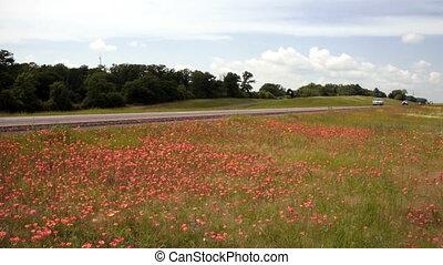 Wildflowers Springtime Horizon Rural Countryside Interstate...