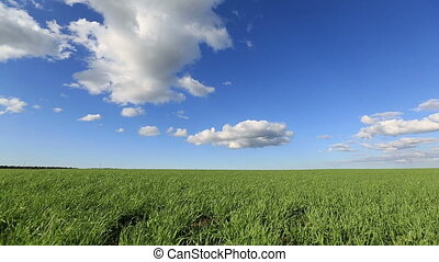 Green field and blue sky and the wind field on a background...