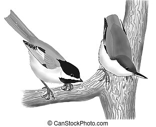 Black-capped Chickadee and Pygmy Nuthatch - Black-capped...