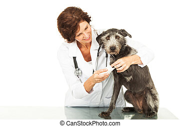 Veterinarian Caring For Injured Dog - Female professional...