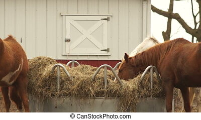 Horses Feed On Stray Hay Bales Farm Ranch Animals - Three...