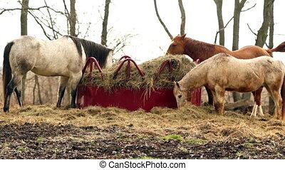 Horses Feed On Stray Hay Bales Farm Ranch Animals - Three...