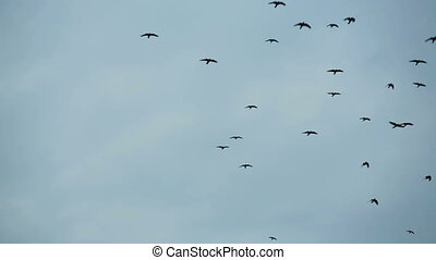 Flock Of Birds Flying Free In The Sky - Lots of small black...