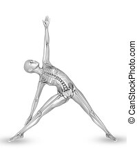 3D female medical figure with skeleton in yoga pose