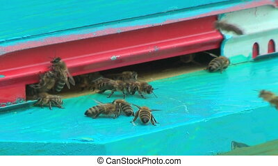 Working process of bees in a beehive