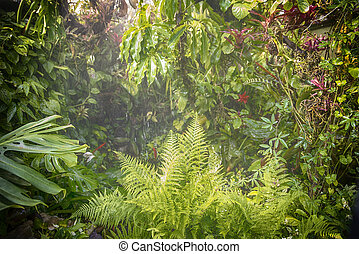 rain in forest jungle - humid tropical rain forest with...