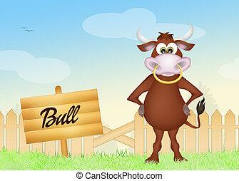 bull - illustration of bull