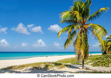 Sandy beach with coconut palm tree, Caribbean - Amazing...