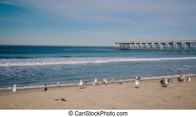Seagulls and surfers on the beach - Seagulls and surfers on...