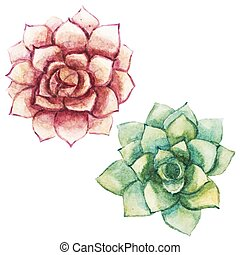 Nice watercolor succulents - Beautiful vector image with...