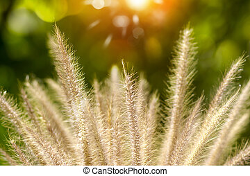 Flower grass impact sunlight.