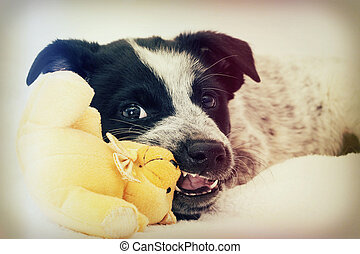Funny puppy chewing on a toy