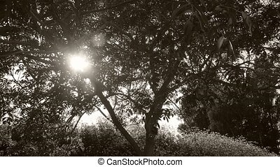 Timelapse of a sunset behind a tree i n black and white -...