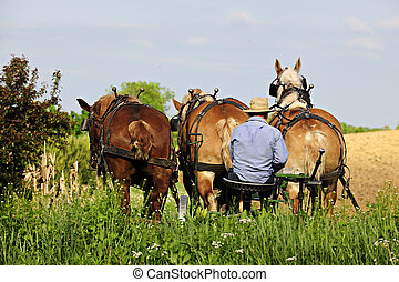 Amish Man Plowing with 3 Horses - The back of an Amish man...