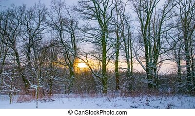 sunset in the winter forest, time-l