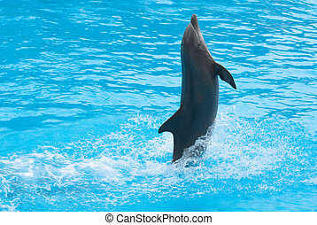 Dancing dolphin - Dolphin show