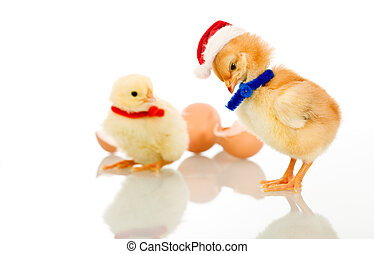 Christmas party chicks - isolated - Christmas party chicks...
