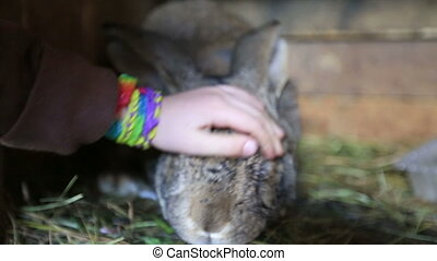 rabbits on the farm - Rabbit stroking a childs hand