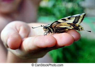 Swallowtail - Butterfly, swallowtail, at the hands of a...