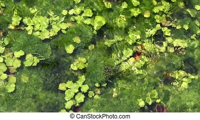 underwater river's plants - view of underwater river's...