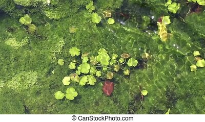 underwater river's plants with stones%u3000