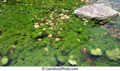 underwater rivers plants - view of underwater rivers plants...