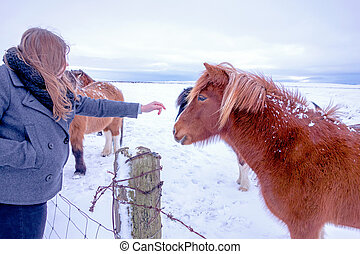 Pony and girl a winters day in Iceland