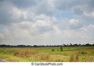 Sky and Cloud with Ricefield
